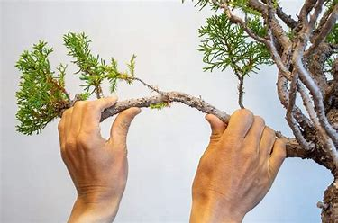 bending a branch.jpg